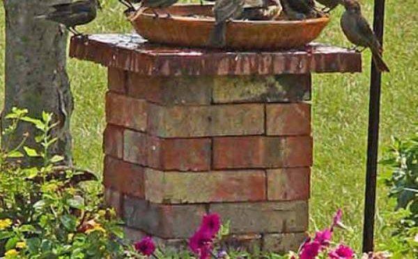 Jak jednoduše přes léto pomoci ptákům