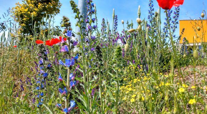 Omezení sekání trávy v naší obci